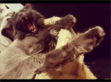 My kitty Tiberius on November 8th 2018!